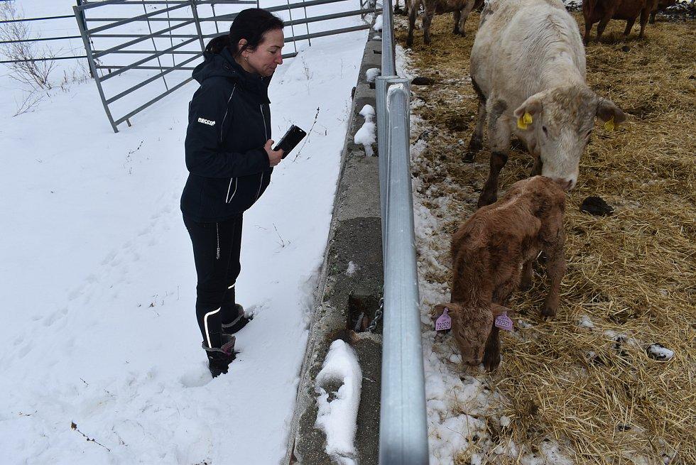 Hovězí z farmy v Jindřichově ve Slezsku není určeno pro obchodní řetězce. Farmářka Andy Franková ho rozváží přímo koncovým zákazníkům.