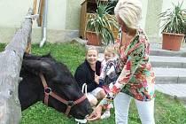 Makedonský oslík vítá návštěvníky turisticky oblíbené Farmy Kočov.