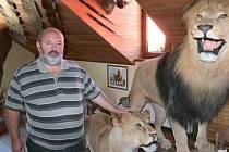 Lva a lvici ulovil Jiří Čížek osobně při svých vyjížďkách po africkém kontinentu. Nyní se na ně lidé mohou přijít podívat do Afrického muzea v Jelení.