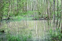 Staré Hliniště je po deštích podmáčené tak, že zde od úterka až do odvolání platí zákaz vstupu. Opatrnost je na místě, protože po povodních v roce 2007 se zde několik stromů vyvrátilo přímo na naučnou stezku.
