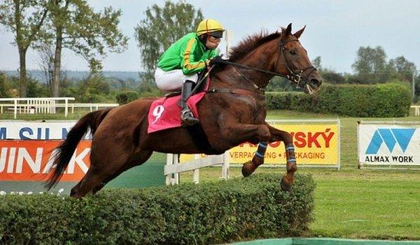 Jezdecká škola Amír zRudné pod Pradědem vysílá do rámcového dostihu Velké pardubické koně Liesbriefa sfrancouzským jezdcem Thomasem Boyerem.
