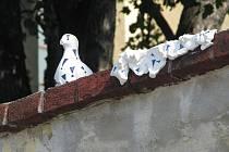 Neznámý streetartový umělec potěšil Krnovany dalším holubem. Je bílý s modrými vykřičníky a má ulomený zobák.