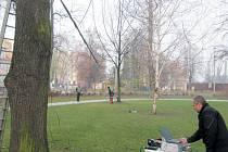 Tahová zkouška prověří patnáct stromů ve Smetanových sadech.