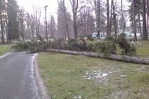 V důsledku kalamitního stavu, způsobenému silným nárazovým větrem a silným podmáčením půdního profilu po jednorázovém přívalu sněhových a dešťových srážek z úterý 31. března, je do čtvrtku 2. dubna prostor městského parku v Kavalcově ulici zavřen.