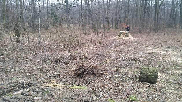 Ve Varnsdorfu někdo ukradl 130 let starý strom.