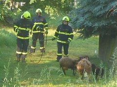 Stádo ovcí vyjeli chytat hasiči a policisté do Jílového.