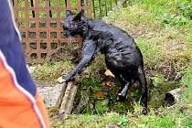 Zachráněná zvířata byla po vytáhnutí celá mokrá.
