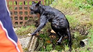 www mokré velké kočička