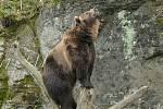 Medvěd Bruno.