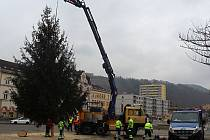 V pátek přivezli vánoční strom na Masarykovo náměstí v Děčíně.