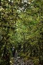 Deštný les v severní Patagonii.