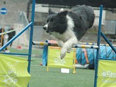DĚČÍN bude opět hostit agility závody.