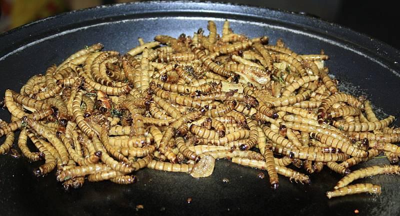 Hmyzí pochoutky si lidé vychutnávali v Centru Pivovar v Děčíně. Připravoval jim je šéfkuchař Milan Václavík