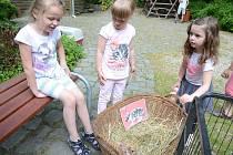 Dětský den v děčínské zoo.