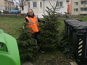 Úklid vánočních stromků v Děčíně zajišťuje Středisko městských služeb.