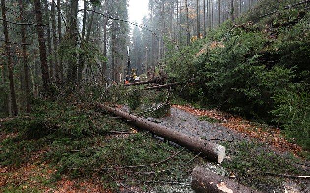 Lesní dělníci likvidují škody po nedělní vichřici vnárodním parku.