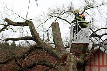 Třicetimetrovou lípu, která se v Bělé opřela o dům, hasiči rozřezali.