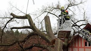 Likvidace stromu v Bělé
