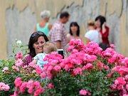 Den růží na děčínském zámku.
