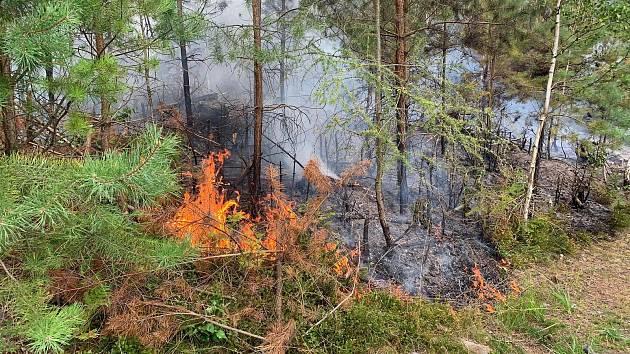 Požár lesa v Děčíně-Bynově.