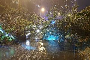 Bouře na Děčínsku lámala stromy.