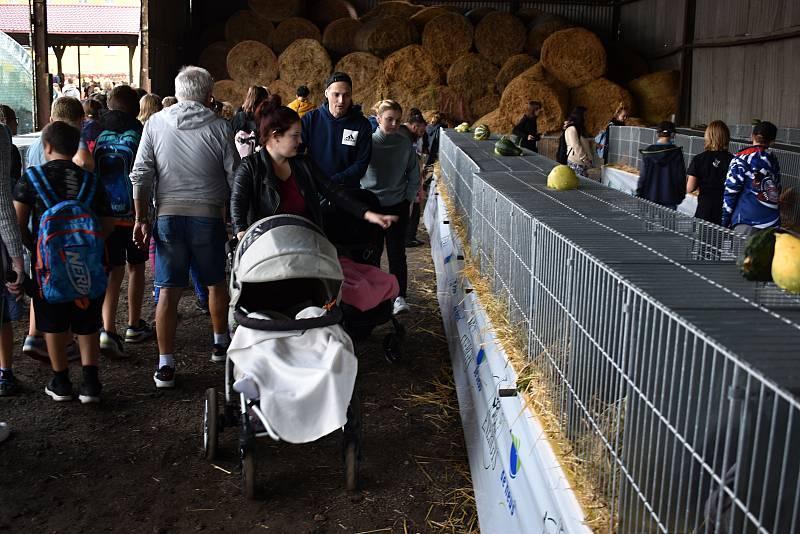 Po roční přestávce se na děčínskou Libverdu vrátila zemědělská výstava.