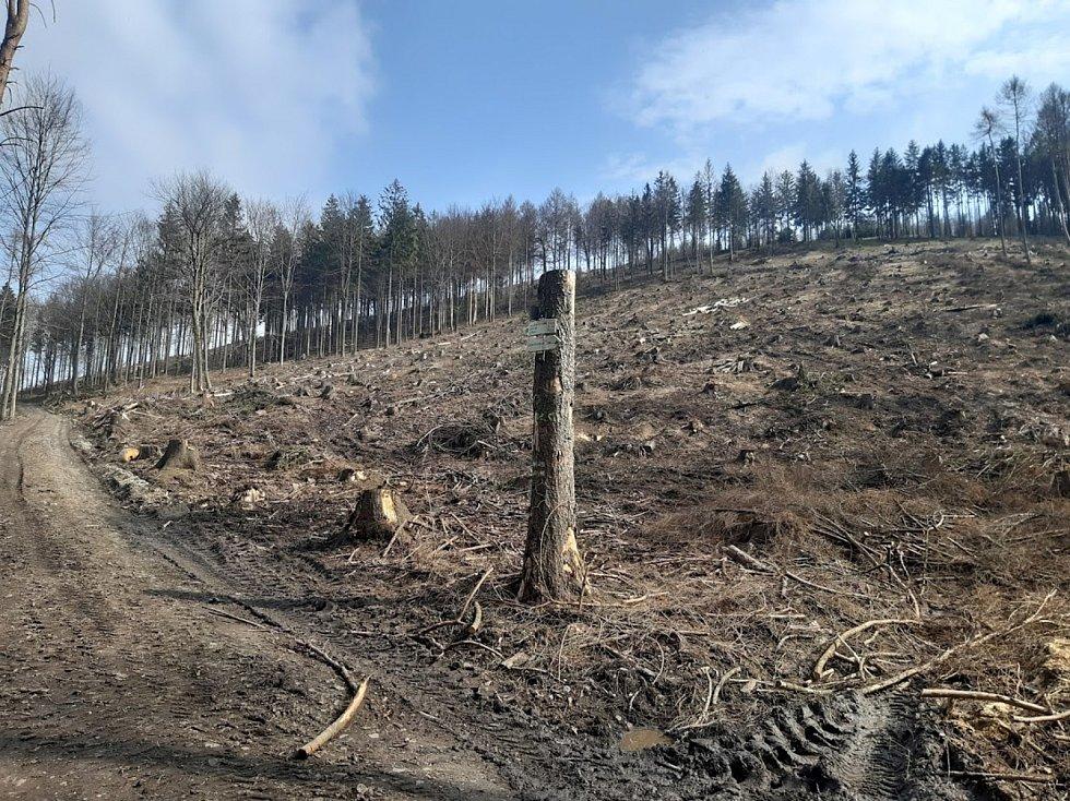 Následky kůrovcové kalamity na severu Čech.