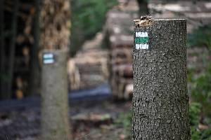 Těžbou po kůrovci zasažené lesy na Maxičkách.