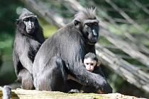 Mládě makaka.