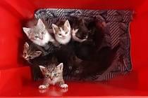 Odložená koťata našla během pár hodin nové domovy.