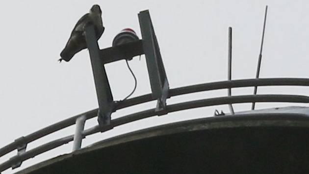 Sokoly na komíně v Děčíně sledovala kamera.