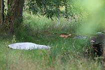 Muž utonul v rybníku v Rumburku. Našli ho v pátek ráno.