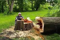 Hasiči porazili strom na Mariánské louce.