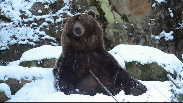 Medvěd Bruno a sníh.