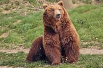 Do děčínské zoo přivezli medvěda kamčatského Bruna.
