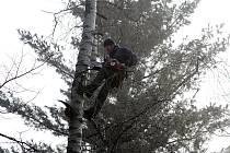 Pro stromolezce Jana Štveráka nejsou ani v 73 letech vysoké stromy žádnou překážkou.