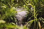 Voda na Šlunkovsku