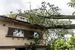 Vítr zlomil ve Varnsdorfu vzrostlý strom.