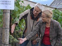 Zahradnice Alena Ungrová a ředitelka děčínského zámku Iveta Krupičková kontrolují stav hroznů po chemickém ošetření.