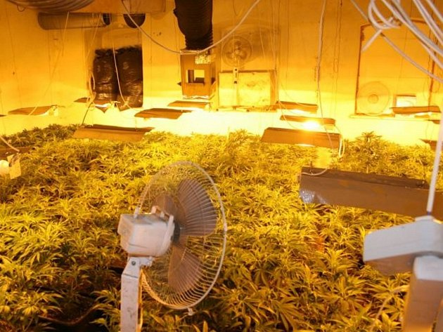 Kriminalisté na Šluknovsku odhalili další pěstírnu.