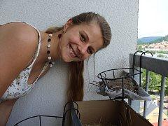 Ptáci jsou krotcí a nevadí jim, že hnízdí hned vedle posezení majitelů bytu.