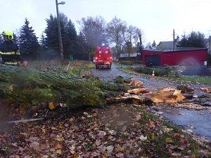 Vítr značně poškodil mohutný strom na Sněžníku
