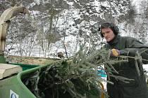 Začali likvidovat vánoční stromky