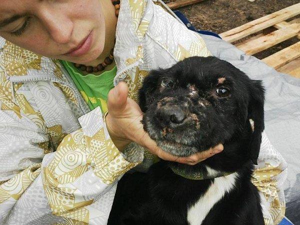 Týraný pes je nyní ve Varnsdorfu.
