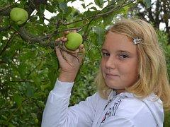 Jablka sklizená na zahrádce u rodinného domu na Letné Terezka Bugárová na svačinu do školy letos nosit nebude. Jejich jabloň prakticky žádnou úrodu totiž nenabízí.