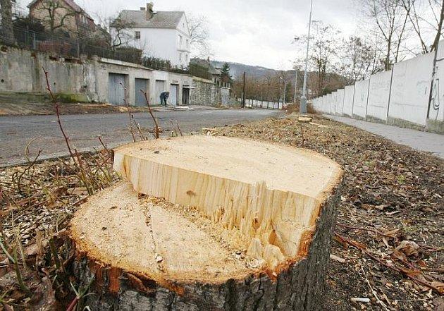Podle dendrologů vykácení stromů v Truhlářově ulici asi nebude stačit. Půda je tu nekvalitní a každý strom, který v Truhlářově ulici v minulosti město zasadilo, uhynul na napadení houbami.