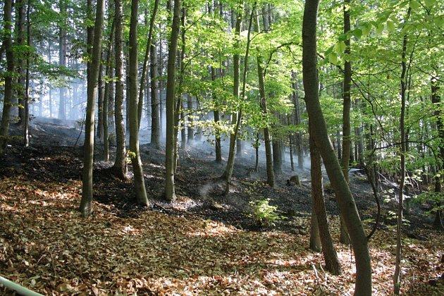 Požár lesa u Sněžníku.