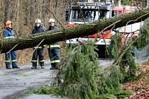 Do ulice Lesní vyjeli dobrovolní hasiči z Rumburku, jeden ze stromů se kvůli silnému větru vyvrátil a spadl přes silnici na dráty s elektřinou.