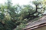Na obchod radního Grešíka spadl strom