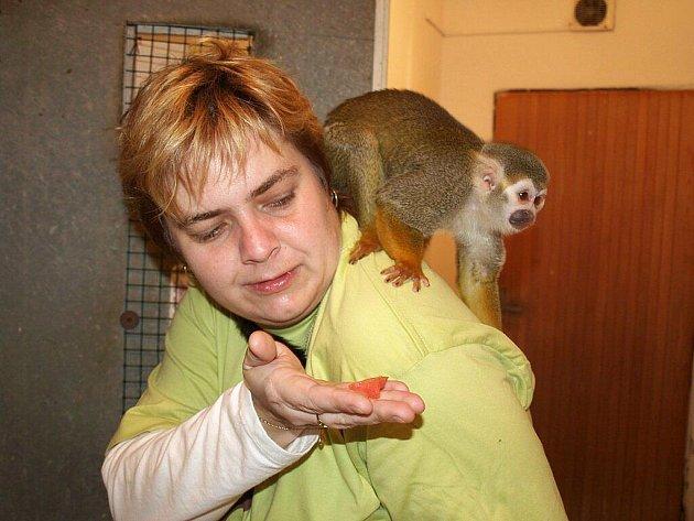 Redaktroka Děčínského deníku Ilona Rosenkrancová se na jednu hodinu stala ošetřovatelkou malých opiček v děčínské zoo
